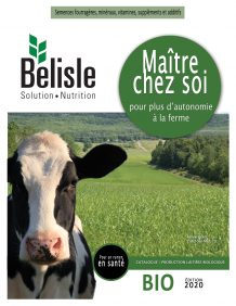 Vache laitière biologique